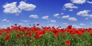 Meaning of Red Poppies